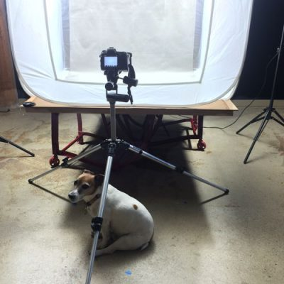 Our Shop dog, Hubie, during one of our many corner sample photo sessions